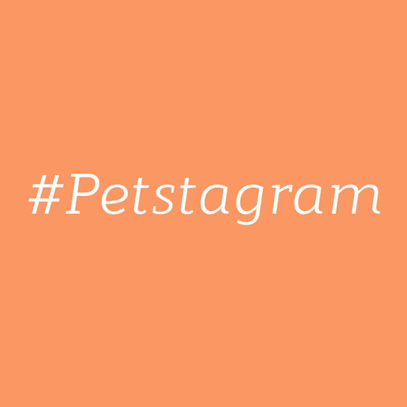 The top dog accounts on Instagram that you should follow right away!
