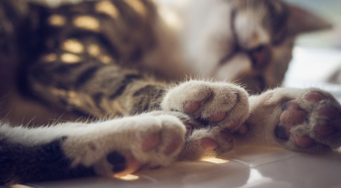 Why you should never declaw your cats?