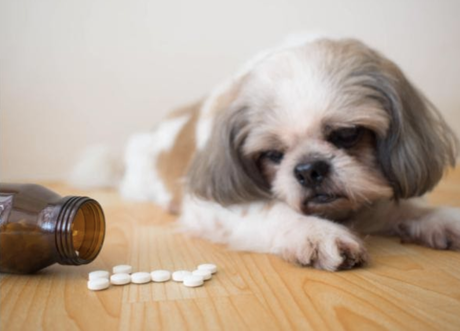 Top 5 kind of medications for your dog's good health