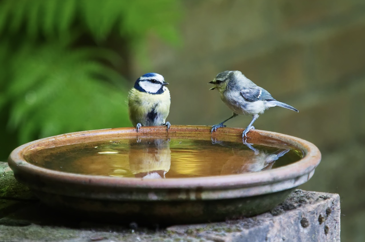 How to help birds with water during summers