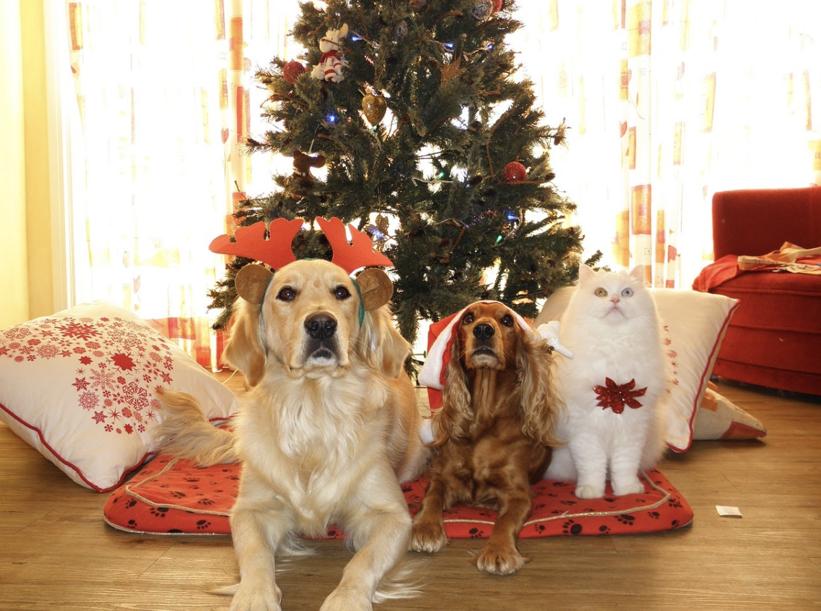 7 pet safety tips for a merry Christmas