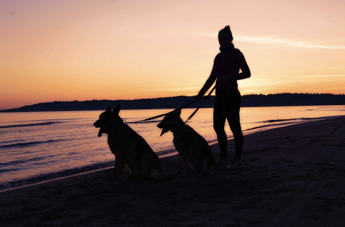 Top New Year resolutions for pet owners