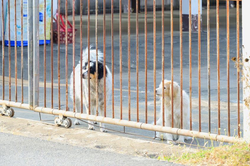 Locked out Indians are abandoning their pets on the streets—helpless, scared, and hungry